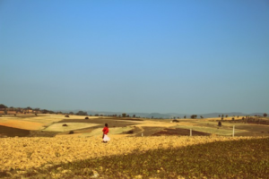 girl-walking-sunflower-field-aung-pan-myanmar